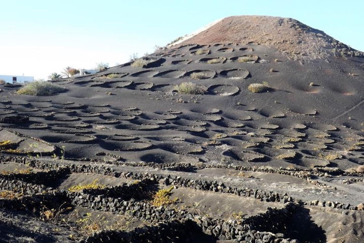 Wine route in Lanzarote, history of wine production in Lanzarote